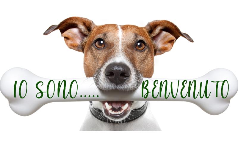 Logo cane osso