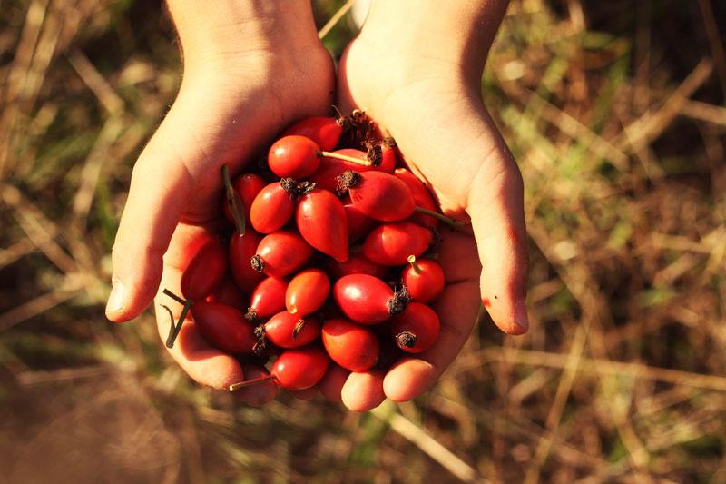 Agriturismo Toscano azienda agricola pomodori