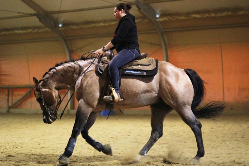 Maneggio cavalli agriturismo firenze