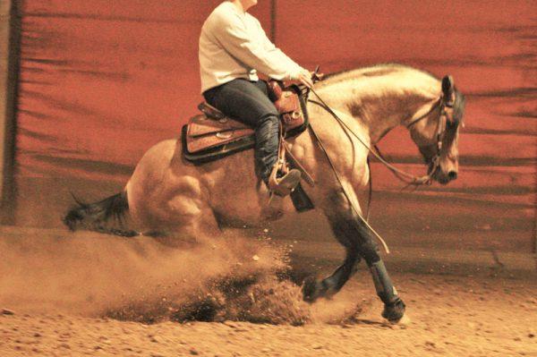 cavalli reining toscana