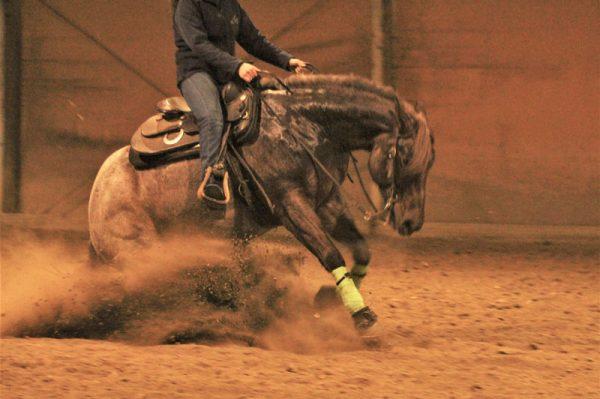 addestramento reining cavallo