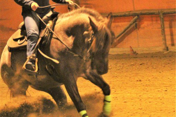 addestramento cavalli toscana