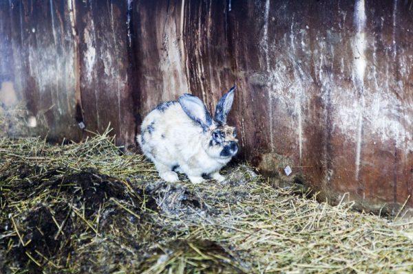 Fattoria didattica agriturismo conigli
