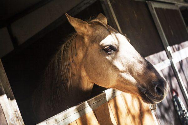 Maneggio cavallo agriturismo