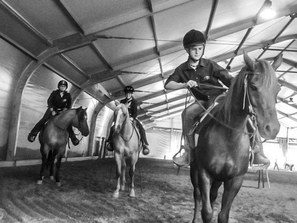cavallo maneggio equitazione