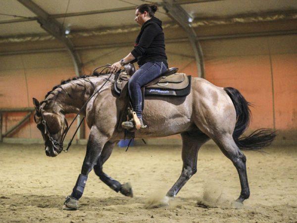 cavallo maneggio equitazione reining