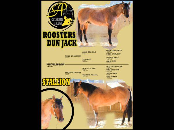 cavallo maneggio equitazione stallone monta